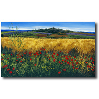 Poppies - Tuscan Meadow