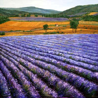Jennifer Vranes 06A004_through_fields_of_lavender